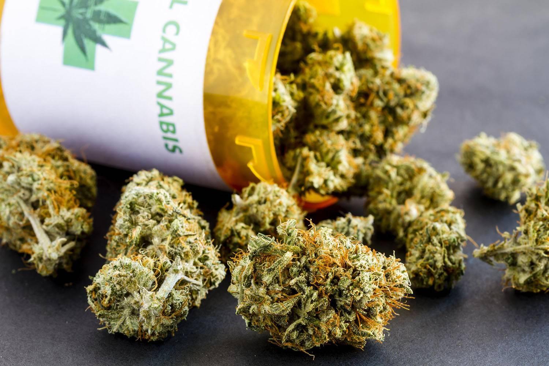 Marihuana Medyczna w Polsce, SprawdzoneNasiona